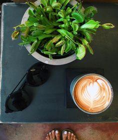 #coffeebondi  #sundayvibes #coffeeroastersbondibeach they also make their very own #nutmilk #almondmacadamiamilk #sydney #vegan #bondibeach #fitness #healthyliving #lovebondi #happysunday #coffee #venusflytrap  by superfood_organics