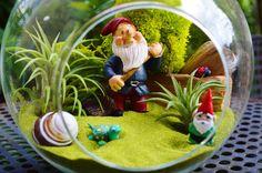 I spy a little Gnome Terrarium  Cute Gnome by BeachCottageBoutique, $40.00