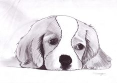 drawing of a puppy dog