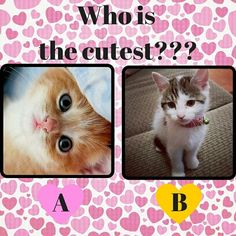 ?? GUESS!!  #CATS #CANDYCAT #CATURDAY