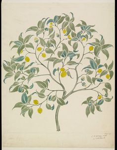 Design entitled 'The Ornamental Tree', depicting a lemon tree, on a pale ground; Pencil and watercolour, on paper; Signed C. F. A. Voysey.