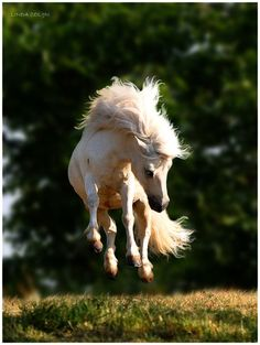 To me, horses and freedom are synonymous. ~Veryl Goodnight