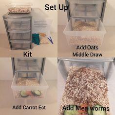 How to set up a self sorting mealworm breeding kit Bartagamen Terrarium, Snake Terrarium, Terrarium Ideas, Leopard Gecko Habitat, Leopard Gecko Care, Bearded Dragon Habitat, Bearded Dragon Cute, Reptile Habitat, Reptile Room