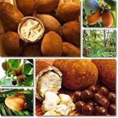 Properties and Benefits of Cupuaçu Cupuacu Butter, Pretzel Bites, Fruits And Vegetables, Health Benefits, Vitamins, Stuffed Mushrooms, Nutrition, Medicine, Trees