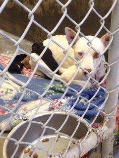 NEXT on DEATH ROW - please, don´t hesitate, this shelter kills very fast --- This poor mom is emaciated. She needs out. She is an owner surrender (Odessa, Texas) and needs out now!!! She needs a foster, rescue or adopter now!! PM us if you can help her. She is urgent. She and her babies don't have long —located at ODESSA SHELTER https://www.facebook.com/photo.php?fbid=721462211211353&set=pb.248355401855372.-2207520000.1390987852.&type=3&theater