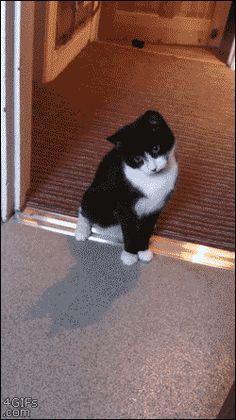 7 Best Cat Gifs of the Week June 2016 We Love Cats and Kittens - Funny Cat Quotes Cute Funny Animals, Funny Animal Pictures, Funny Cute, Funny Dogs, Funny Cat Gif, Cute Cat Gif, Hilarious, I Love Cats, Crazy Cats