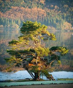 Scottish Tree House Lodge – http://treehouselove.com/post/65043750222/scottish-tree-house-lodge