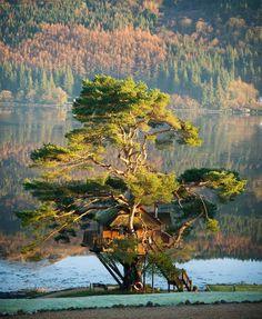 Scottish Tree House Lodge – http://treehouselove.com/post/65043750222/scottish-tree-house-lodge