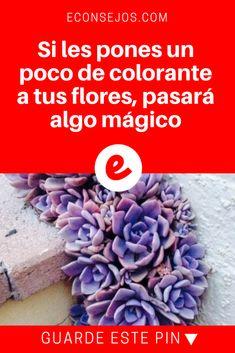 Teñir flores naturales   Si les pones un poco de colorante a tus flores, pasará algo mágico   ¡No lo creí hasta que lo probé yo misma! Nylon Flowers, White Flowers, Coloring, Health Recipes