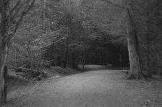 woodland path, deeply shadowed with overhanging branches