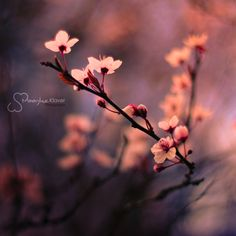 From Blossoms by MaaykeKlaver.deviantart.com