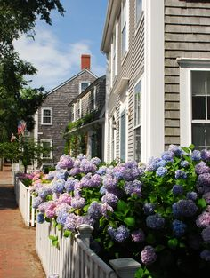 Hydrangeas at Martha's Vineyard.such a beautiful and quaint place Nantucket Cottage, Nantucket Style, Nantucket Island, Coastal Cottage, Coastal Living, Destinations, New England Style, Beach Cottage Decor, Beach Cottages