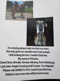 Found Cat, Losing A Dog, Find Pets, Lost & Found, Michigan, Facebook, Female, Princess, Cats