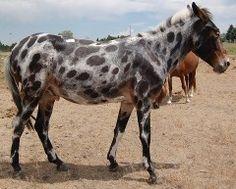 The Spotty Mule