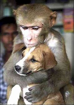 Puppy and monkey in Bangledesh. I'm reminded of Patricia McConnell saying how primates are huggers & dogs are not.