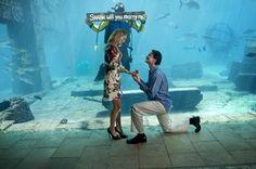The perfect proposal at Atlantis, Bahamas Bahamas Honeymoon, Atlantis Bahamas, Perfect Proposal, Paradise Island, Destination Wedding, Mexico, Weeding, Engagements, Aquarium
