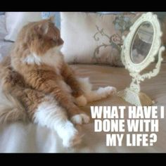 This is me, but the cat is cuter. So funny. (Thx Laugh it Out) - xo, E