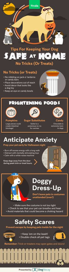 Keeping your pet safe during Halloween can be a scary task! There are actually tons of potential hazards, many of which you wouldn't expect. Here's how to make sure your pet is safe!