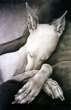 """Crossed Paws"" ---- [Charcoal drawing of a Whippet]~[Photograph by gooseflesh (Helle Jorgensen) - Illustration Art, Illustrations, Mundo Animal, Italian Greyhound, Dog Portraits, Art Plastique, Dog Art, I Love Dogs, Painting & Drawing"