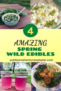 Spring wild edibles are free food foraged from the outdoors. Learn how nettle, cattail, dandelion and violets can be turned into healthy, tasty dishes. Wild Edibles, Violets, Outdoor Fun, Tasty Dishes, Apothecary, Free Food, North America, Dandelion, Yummy Food