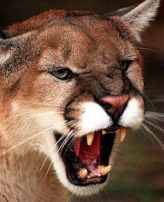 Do Your Homework Before Installing Mountain Lion, OS X 10.8, by Jason D. O'Grady, zdnet #Mountain_Lion #Apple #zdnet #Jason_D_OGrady