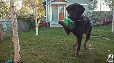 Dog Bottle Game - Travel Version - Dog Plays