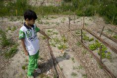 A boy in his school garden. Primary School, Playground, Education, Garden, Children Playground, Upper Elementary, Garten, Lawn And Garden, Gardens