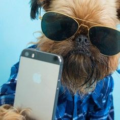 We Uploaded puppy Pics Into This Selfie Rating App, And Here's What Happened