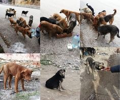 Street animals:  We need your help!!!!  Trying to live in difficult conditions, please help innocent | Crowdfunding is a democratic way to support the fundraising needs of your community. Make a contribution today!