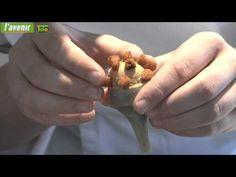 Dans la cuisne du chef : l'entrée du Lemonnier - YouTube