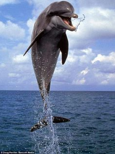 Happy dolphin. Because he's free!