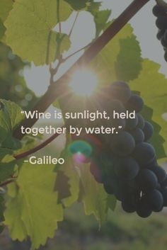 #truth #wine #Ledson