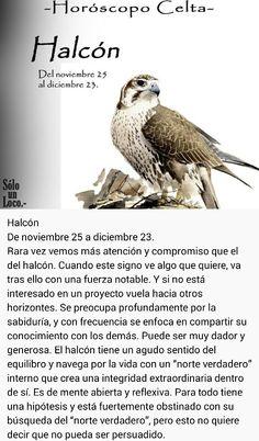 Halcón (25 nov - 23 dic)