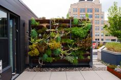 vertical flower gardens - Google Search