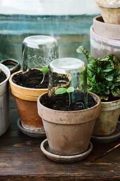 Container gardening is a fun way to add to the visual attraction of your home. You can use the terrific suggestions given here to start improving your garden or begin a new one today. Your garden is certain to bring you great satisfac Herb Garden, Vegetable Garden, Garden Plants, Indoor Plants, Vegetable Planters, Indoor Cactus, Gardening Vegetables, Permaculture, Container Gardening