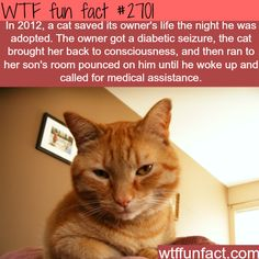 Cat saves it's owners life - WTF fun facts