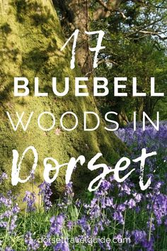 Some of the most amazing bluebell woods in Dorset to explore this spring. From ancient woodlands to Iron Age hillforts with incredible views to forests dotted with hidden art and architecture! Time to plan a few woodland walks to enjoy our stunning springtime wildflowers! #bluebells #spring #dorset Hidden Art, Iron Age, Wildflowers, Art And Architecture, Forests, Spring Time, Walks, Woodland, United Kingdom