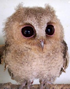 What big eyes you have Mr. Owl