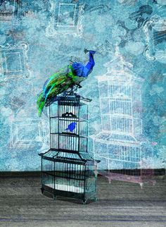 Illustration, bird, peacock, birdcage, quirky, blue, japanese, drawing, print, Etsy, interior