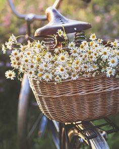 Spring Aesthetic, Flower Aesthetic, Fotografia Floral, Fresh Flowers, Wild Flowers, Beautiful Gardens, Beautiful Flowers, Floral Photography, My Flower