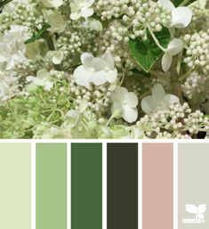 Flora Hues - http://design-seeds.com/index.php/home/entry/flora-hues45