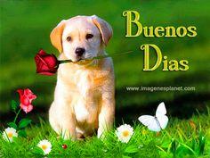 BUENOS DIAS con imagenes bonitas de perrito con rosas y maiposa animadas