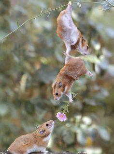 Animales, Siempre nos hacen felices - Taringa!