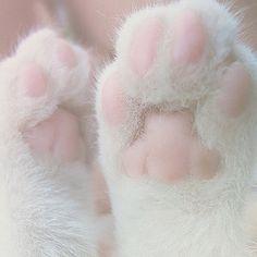 .Patinhas de gatinho <3