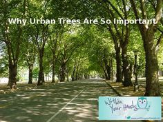 There has been a big push in recent years to not only protect, but also to better manage our urban forests and trees, from our parks and green spaces to even street lined trees. So why are urban trees so important? Forests, Parks, Presentation, Environment, Trees, Urban, Big, Woods, Home Decor Trees