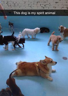 Animal Memes to Make You Laugh on Bad Days - 7