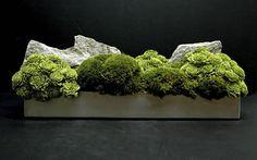 moss centerpiece