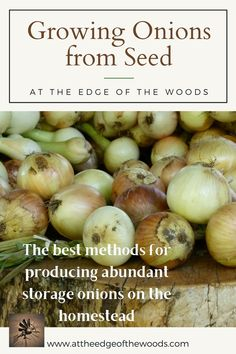 The best methods for producing abundant storage onions on the homestead Growing Onions From Seed, Planting Onions, Permaculture, Abundance, Homesteading, Seeds, Vegetables, Storage, Blog
