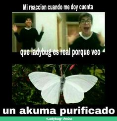 Actually this butterflies exist I saw one on the zoo and I took tons of pictures with it thinking that HawkMoth is going to attack Colombia lol Ladybug Comics, Miraclous Ladybug, Best Memes, Funny Memes, Hilarious, Bb Chat, Thomas Astruc, Lady Bug, Miraculous Ladybug Fan Art