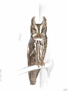 An original painting of Eastern Screech-Owl (alert) by David Sibley in gouache on Bristol Board. Painted in 2013. Published in the Sibley Guide to Birds - Second edition.About 8 by 12 inches.